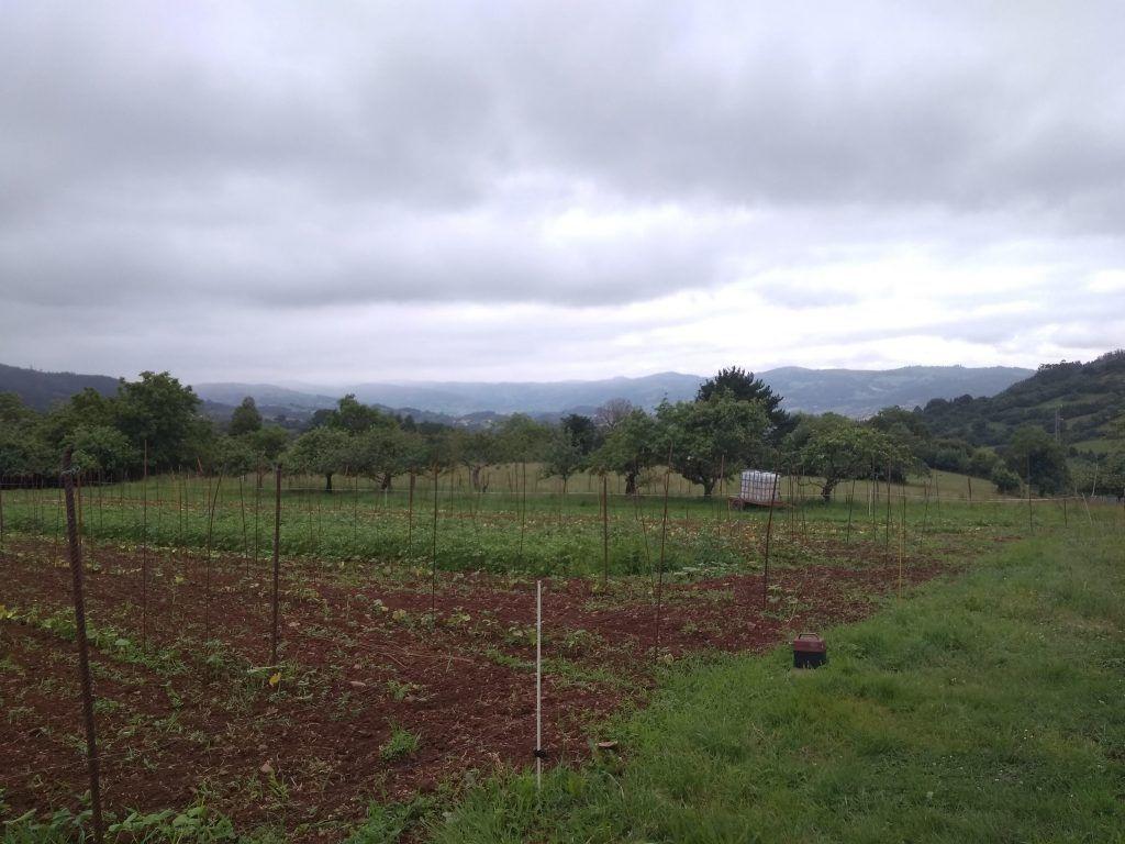 Plantación de Fabes