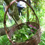 Plantas Silvestres Medicinales y Comestibles